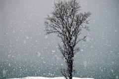 Притча о терпении - Мертвое дерево